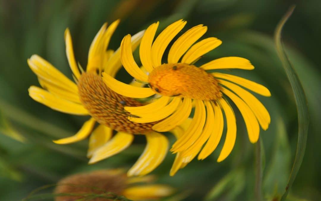 Flower - Shirin