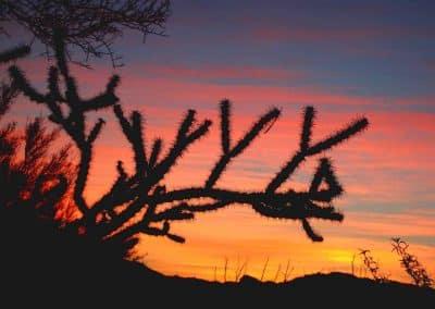 """Tucson Sunset"" - Shirin McArthur"