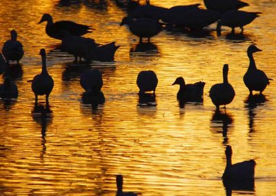 """Golden Pond"" - Shirin McArthur"
